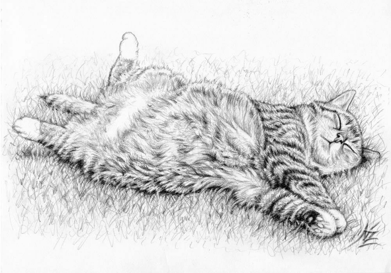 Relaxing Cat - Nicole Zeug