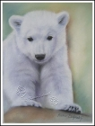 Polar Bear KNUT