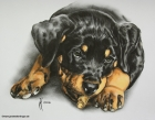 Baby-Rottweiler Alexis (2010)